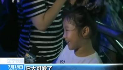 遼寧撫順:人工飼養小海象滿月啦
