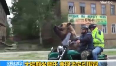 大棕熊坐摩托 表現淡定引圍觀
