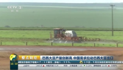 巴西大豆産量創新高 中國需求拉動巴西大豆出口