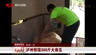 難得一見:瀘州驚現300斤大南瓜