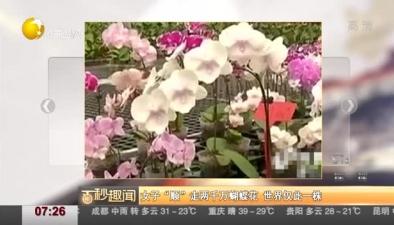 """女子""""順""""走兩千萬蝴蝶花 世界僅此一株"""