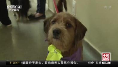 巴西:寵物狗當治療師 撫慰病人傷痛