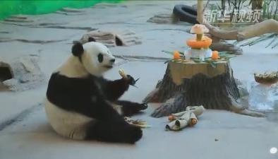 生日快樂!150名小朋友為熊貓慶生