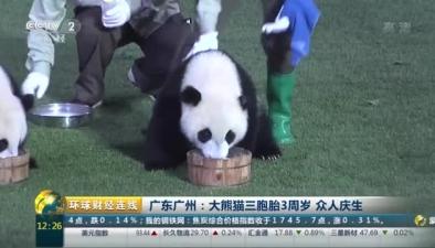 廣東廣州:大熊貓三胞胎3周歲 眾人慶生