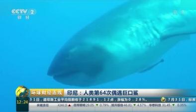印尼:人類第64次偶遇巨口鯊