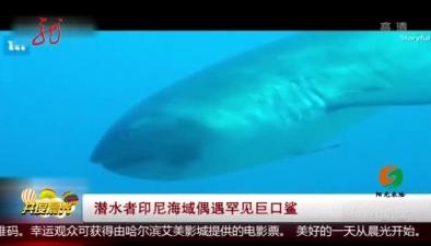 潛水者印尼海域偶遇罕見巨口鯊