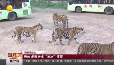 """休閒好去處:天熱 虎園老虎""""抱冰""""度夏"""