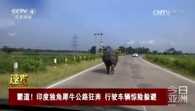 霸道!印度獨角犀牛公路狂奔 行駛車輛驚險躲避