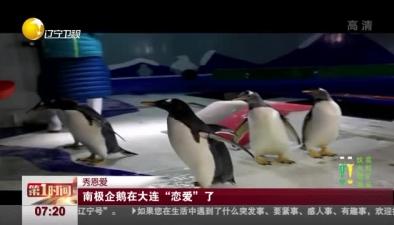 """秀恩愛:南極企鵝在大連""""戀愛""""了"""
