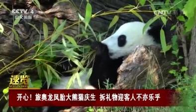 開心!旅奧龍鳳胎大熊貓慶生 拆禮物迎客人不亦樂乎