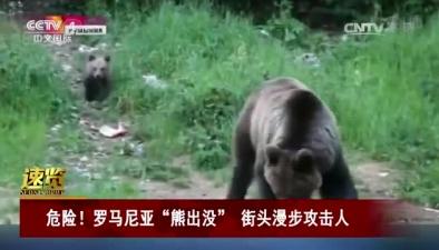"""危險!羅馬尼亞""""熊出沒"""" 街頭漫步攻擊人"""