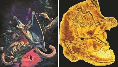 科研新知:中國發現最原始滑翔哺乳動物化石