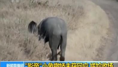 """""""影帝""""小象撒嬌未獲回應 尷尬收場"""