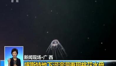 廣西:喀斯特地下河溶洞再現桃花水母