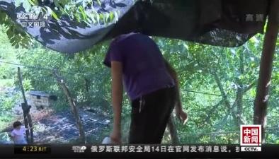 陜西寧陜:男子身高2.13米 36歲還在長高
