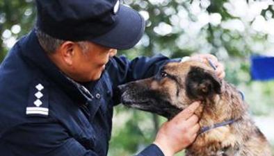 """杭州:老刑警自建警犬養老院 陪伴""""戰友""""走完一生"""