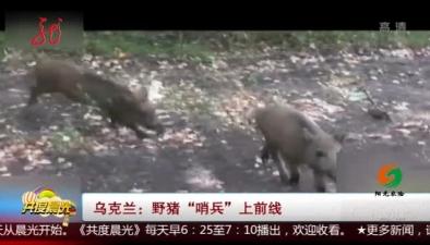 """烏克蘭:野豬""""哨兵""""上前線"""
