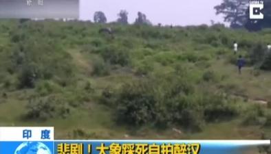 印度:悲劇!大象踩死自拍醉漢