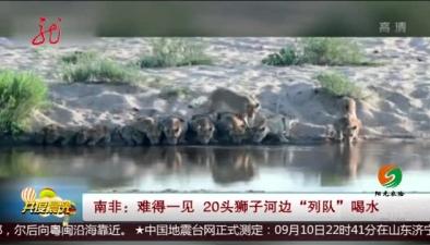 """南非:難得一見 20頭獅子河邊""""列隊""""喝水"""
