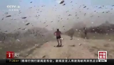 """遮天蔽日 """"蝗蟲大軍""""入侵俄南部"""