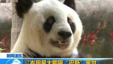 """37歲明星大熊貓""""巴斯""""離世"""