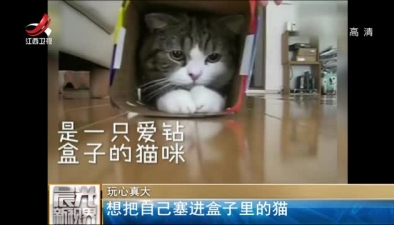玩心真大:想把自己塞進盒子裏的貓