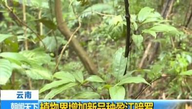雲南:植物界增加新品種盈江暗羅
