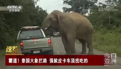 霸道!泰國大象攔路 強掀皮卡車頂找吃的