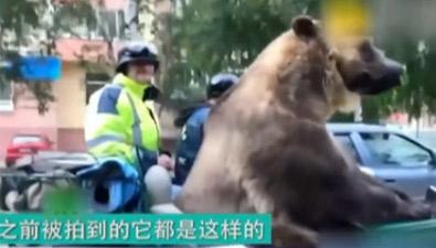 """不走尋常路 大熊""""招搖過市"""""""