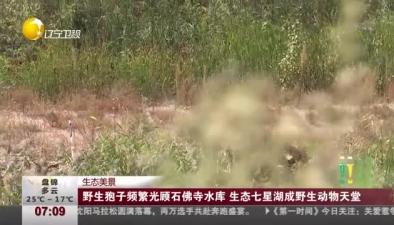 生態美景:野生狍子頻繁光顧石佛寺水庫 生態七星湖成野生動物天堂