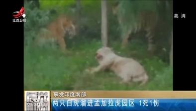 印度南部:兩只白虎溜進孟加拉虎園區 1死1傷