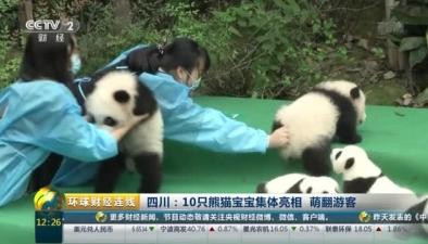 四川:10只熊貓寶寶集體亮相 萌翻遊客