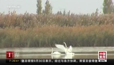 瑪納斯濕地提前半月迎來南遷候鳥