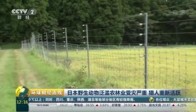 日本野生動物泛濫農林業受災嚴重 獵人重新活躍