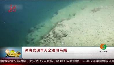 深海發現罕見全透明烏賊