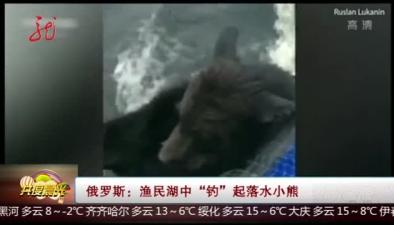 """俄羅斯:漁民湖中""""釣""""起落水小熊"""
