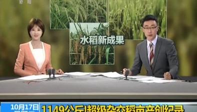 1149公斤!超級雜交稻畝産創世界新紀錄