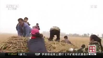 1149公斤!中國超級雜交稻畝産創紀錄