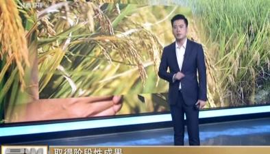 """取得階段性成果:用海水稻""""治愈""""鹽鹼地"""