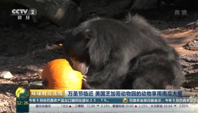 萬聖節臨近 美國芝加哥動物園的動物享用南瓜大餐