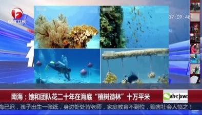 """南海:她和團隊花二十年在海底""""植樹造林""""十萬平米"""