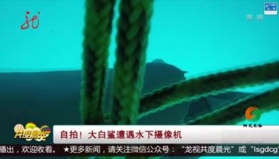 自拍!大白鯊遭遇水下攝像機
