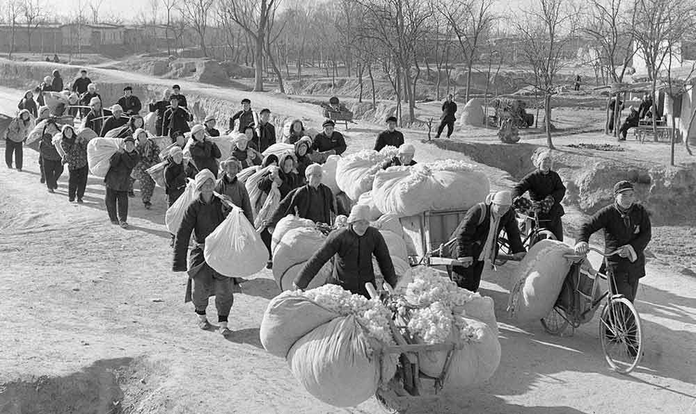 收棉時節,山東夏津縣棉農踴躍交售棉花。
