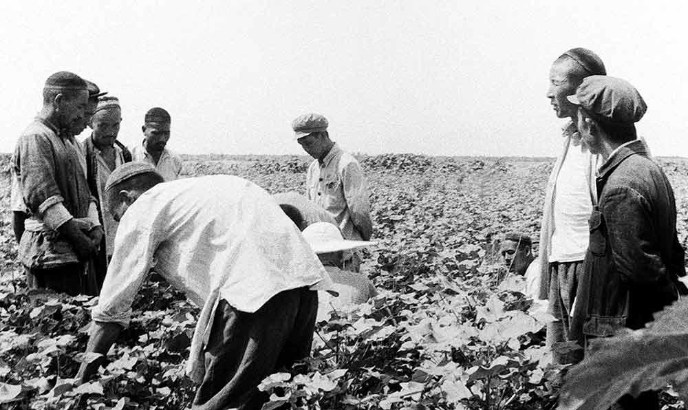1951年,駐新疆開都河北岸的中國人民解放軍強字部隊某部戰士指導當地維吾爾族群眾學習種植棉花的技術。