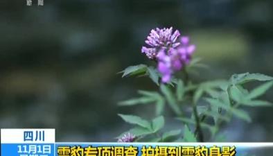 四川:雪豹專項調查 拍攝到雪豹身影