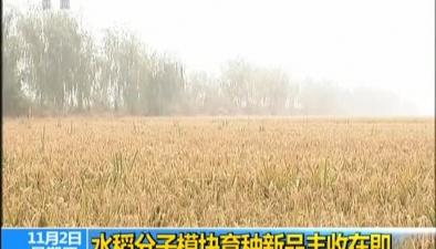 水稻分子模塊育種新品豐收在即