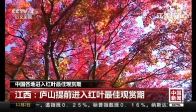 中國各地進入紅葉最佳觀賞期:江西廬山提前進入紅葉最佳觀賞期