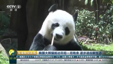 我國大熊貓抵達印尼一月有余 逐步適應新生活