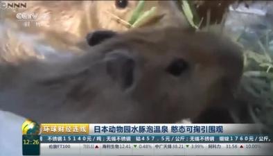 日本動物園水豚泡溫泉 憨態可掬引圍觀