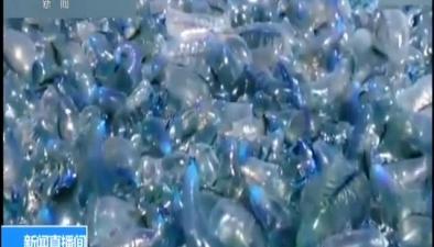 澳大利亞:成群毒水母包圍澳大利亞海灣